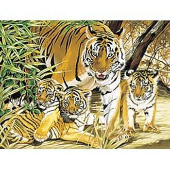 Drawing acrilic kit - Tiger family